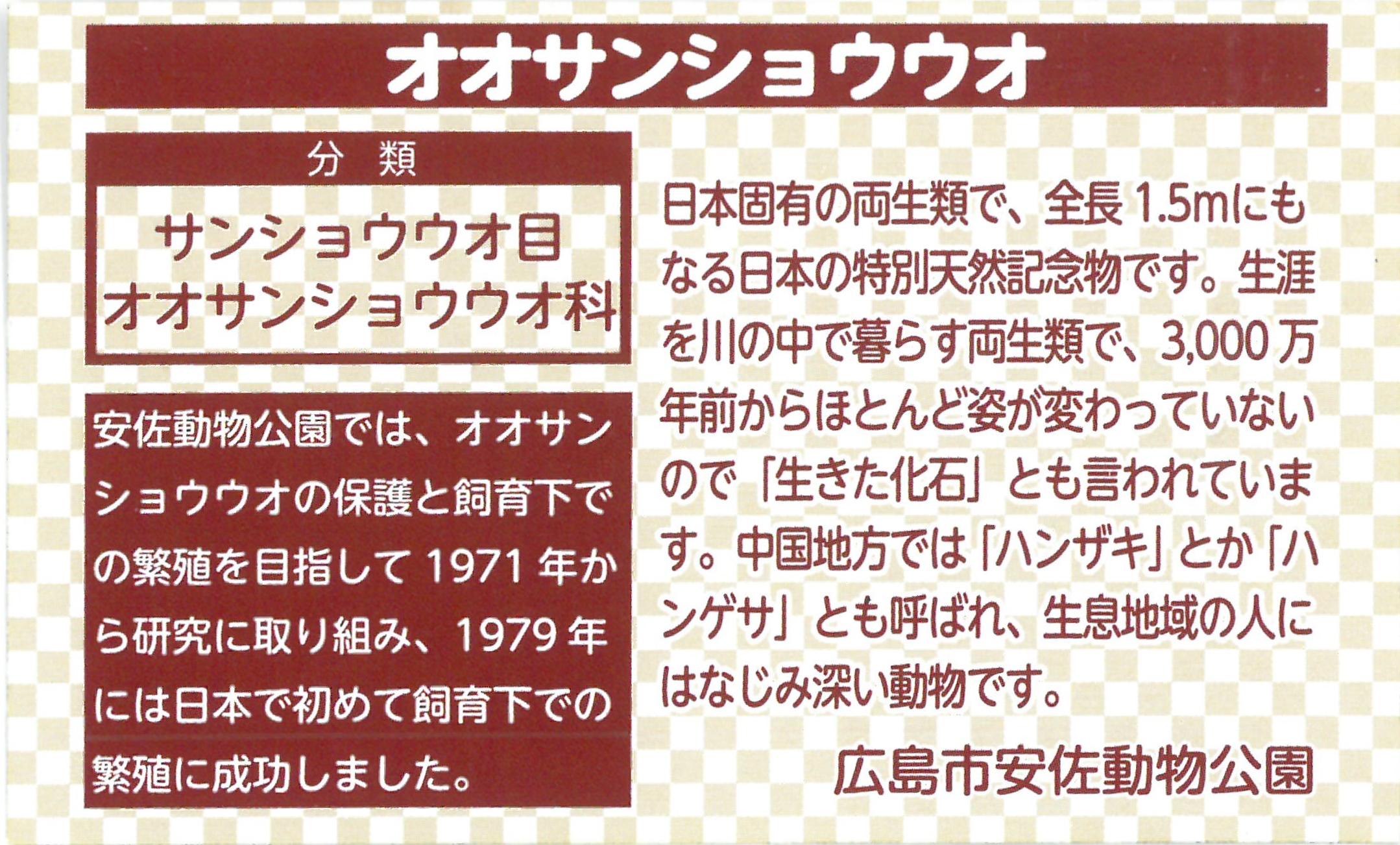 http://www.asazoo.jp/animal/blog/20170614_%E3%82%B5%E3%83%B3%E3%81%A1%E3%82%83%E3%82%93%E3%82%AF%E3%83%83%E3%82%AD%E3%83%BC03.jpg