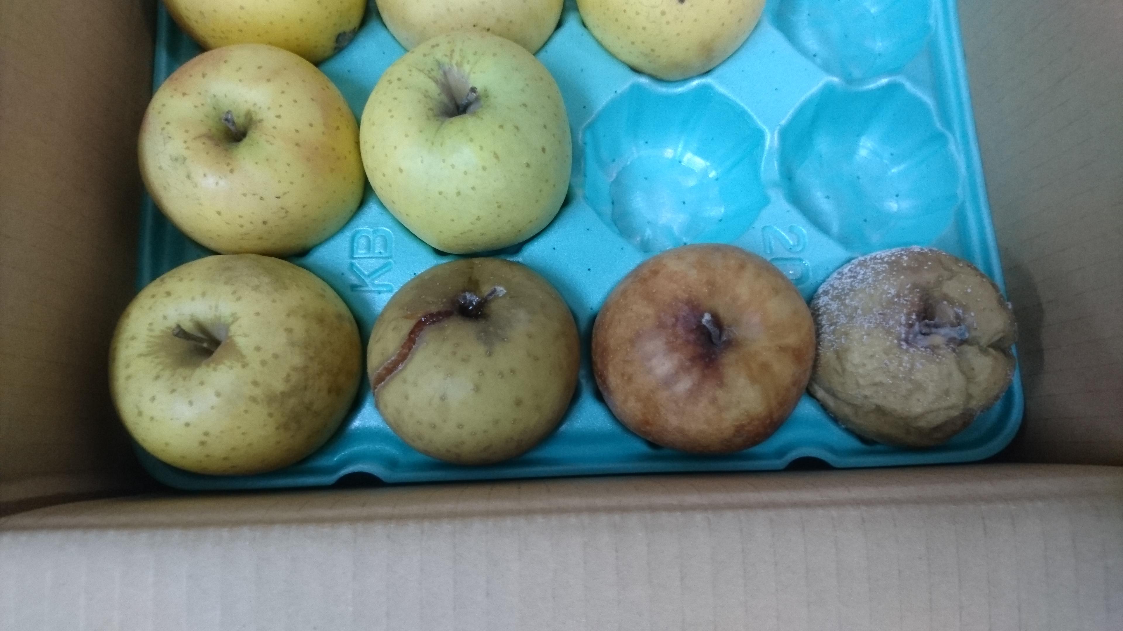 調理室の日常① The rotten apples