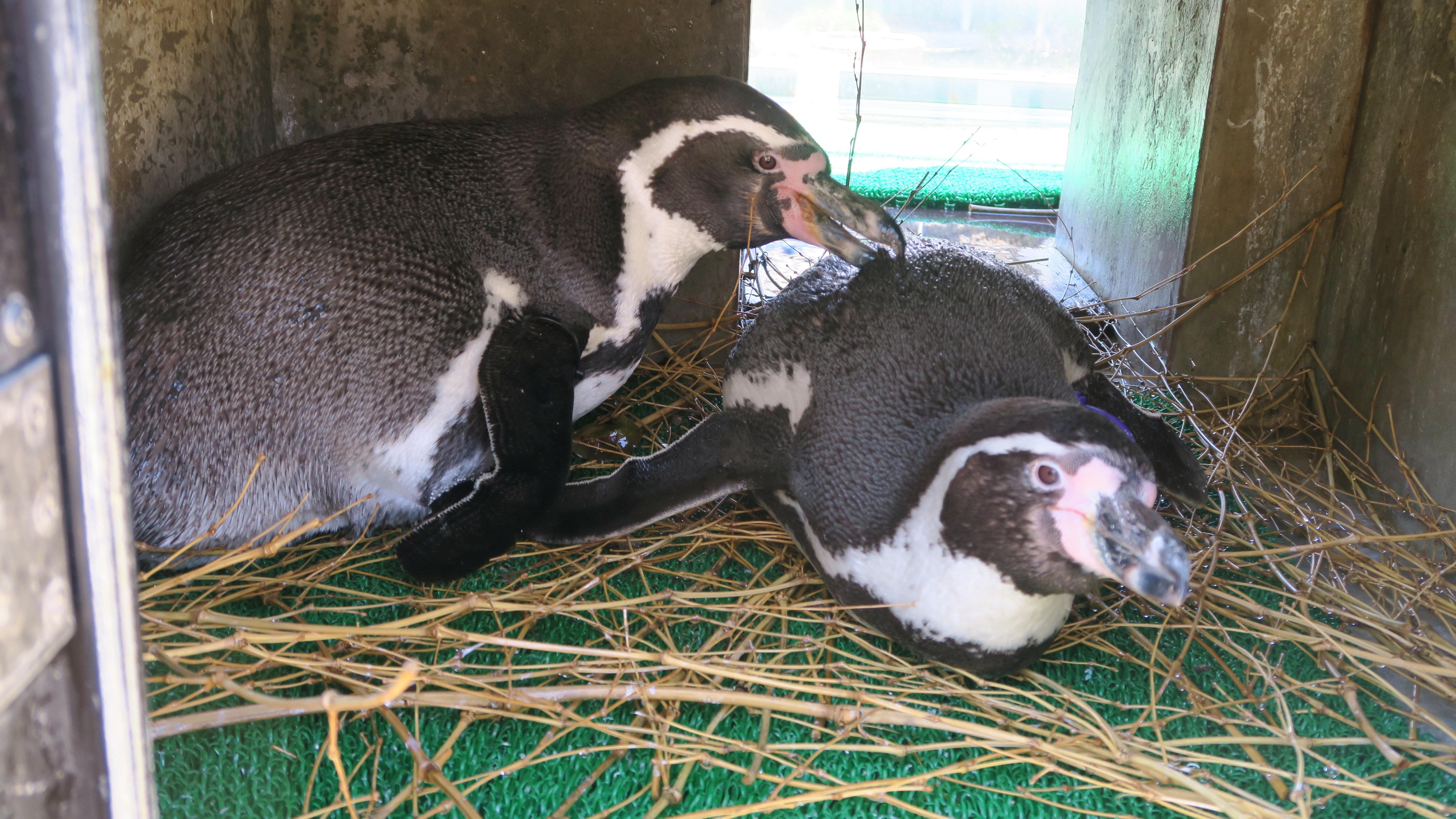 ペンギンぷーるの日常⑧ 来シーズンに向けて