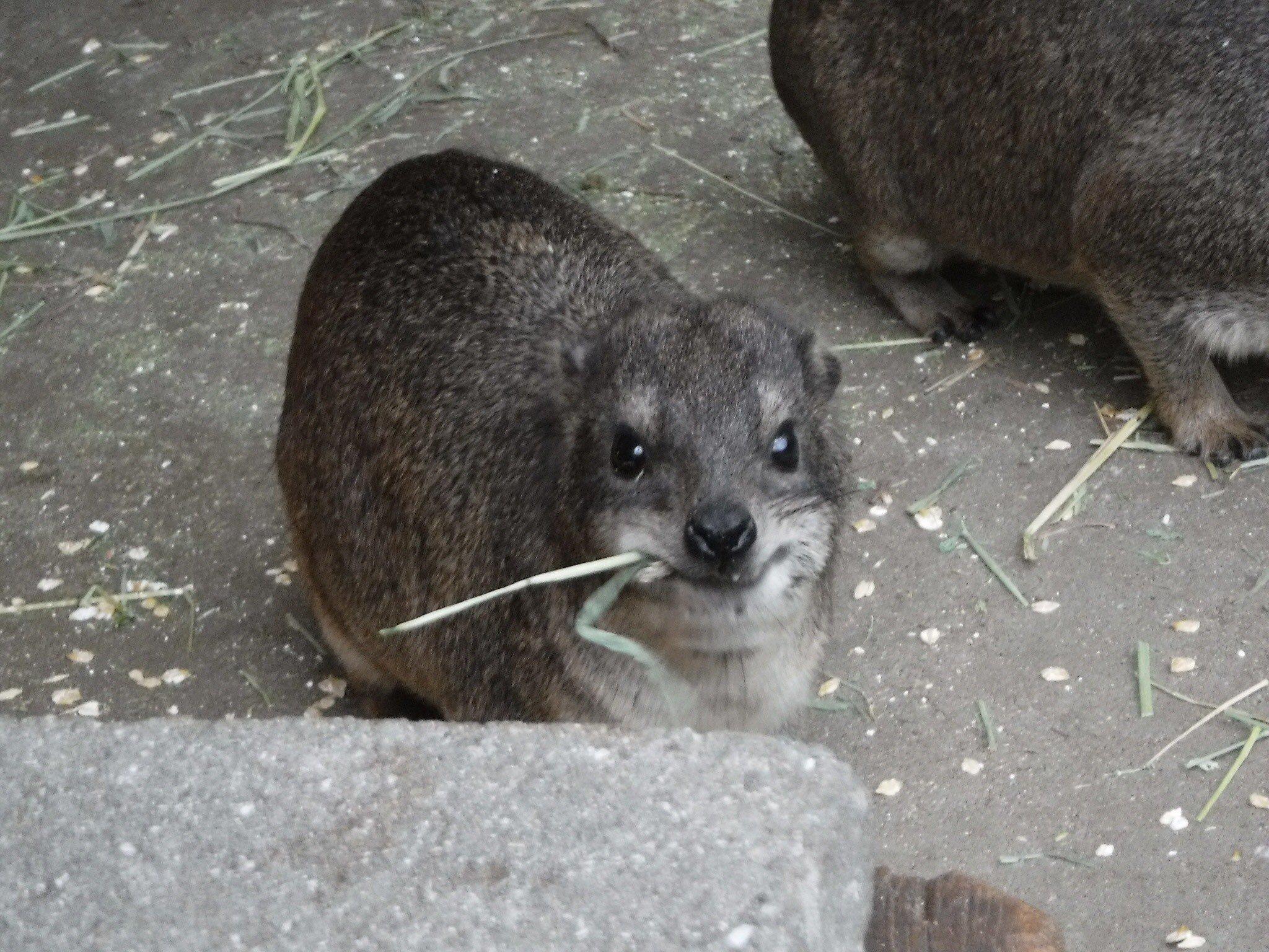 http://www.asazoo.jp/animal/blog/4_7.jpg