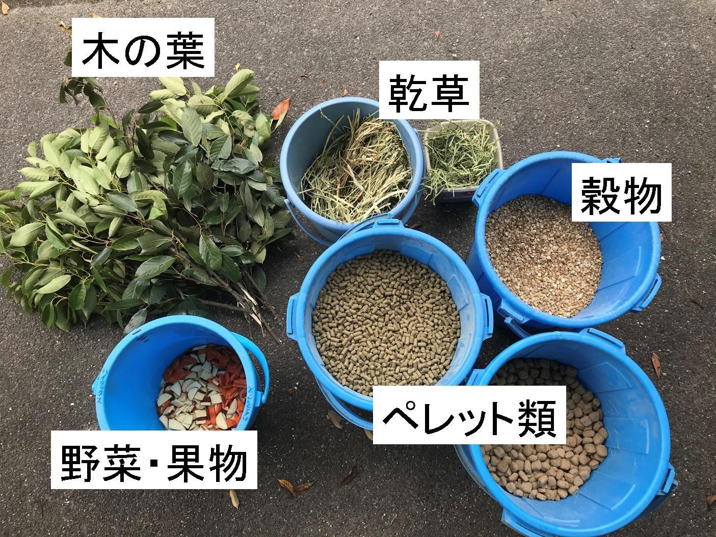http://www.asazoo.jp/animal/blog/4_9.jpg