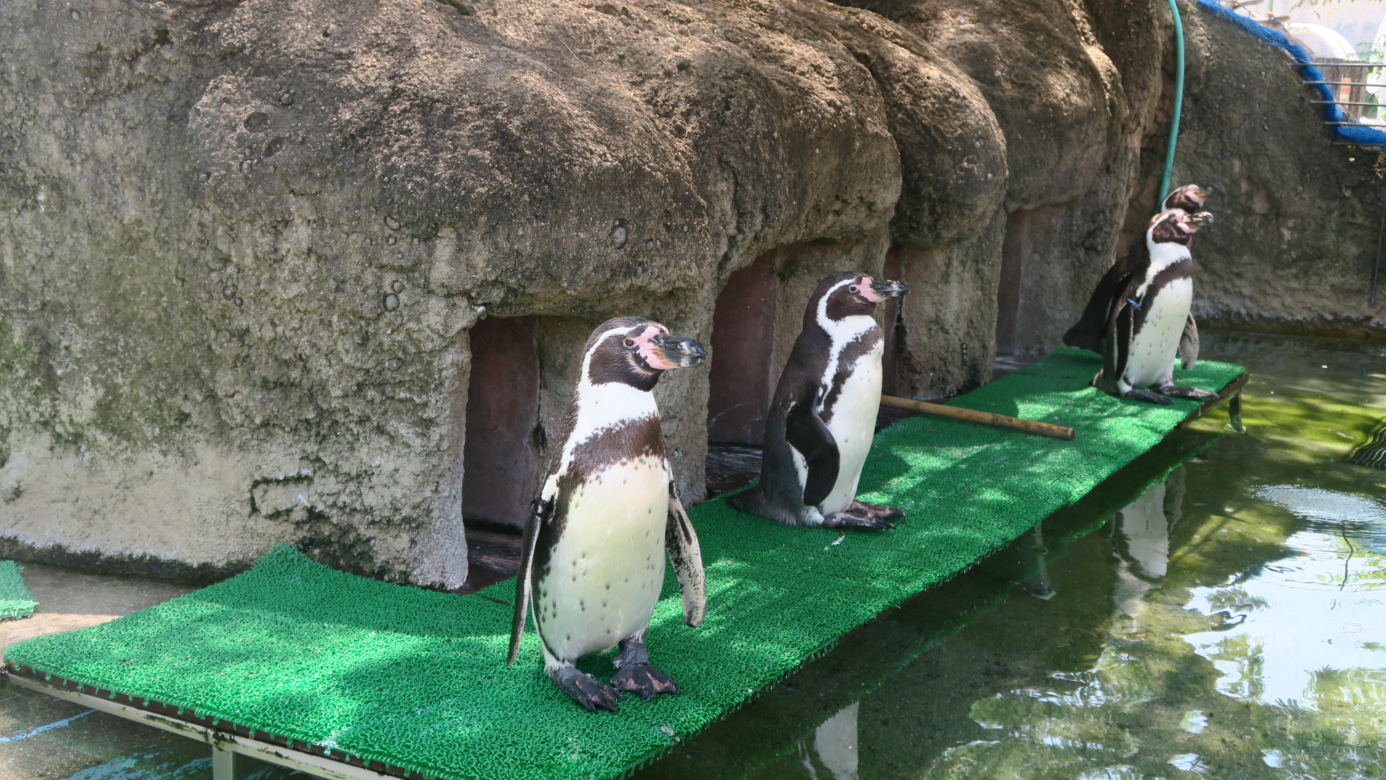 ペンギンぷーるの日常② 血液検査