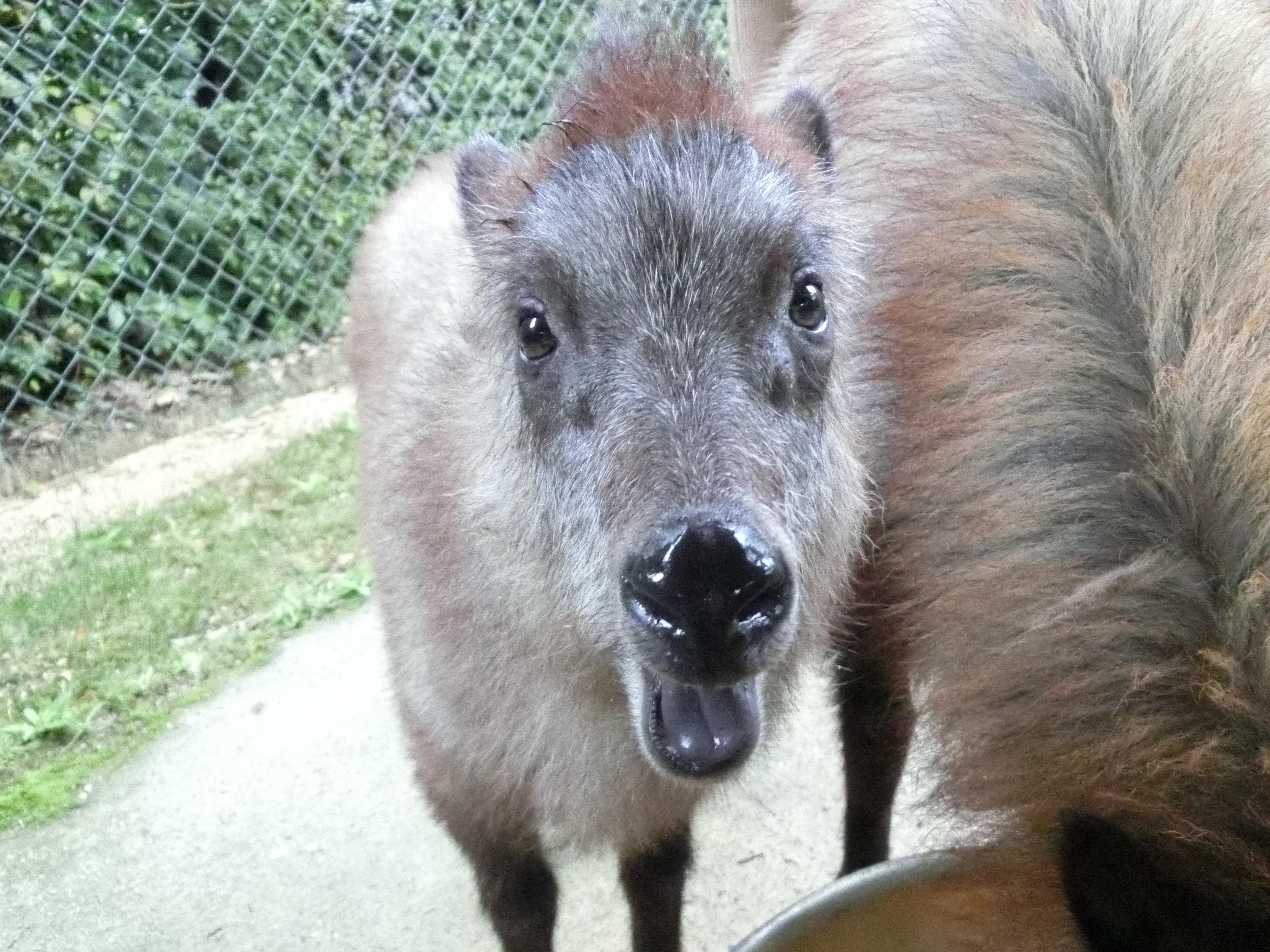 http://www.asazoo.jp/animal/blog/99a0d8ed7e5279aec3099983557587c881084326.JPG