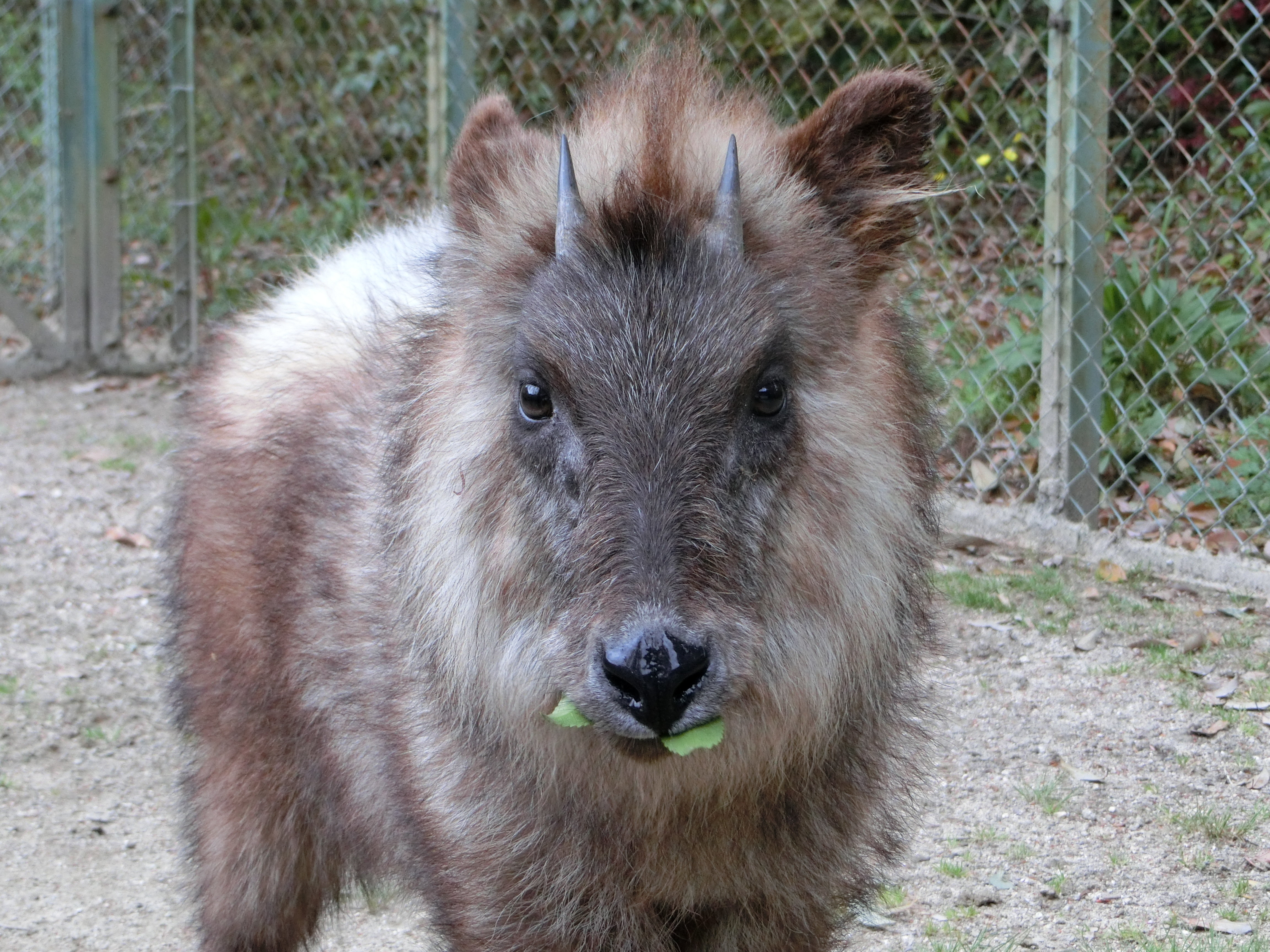 http://www.asazoo.jp/animal/blog/CIMG6259.JPG