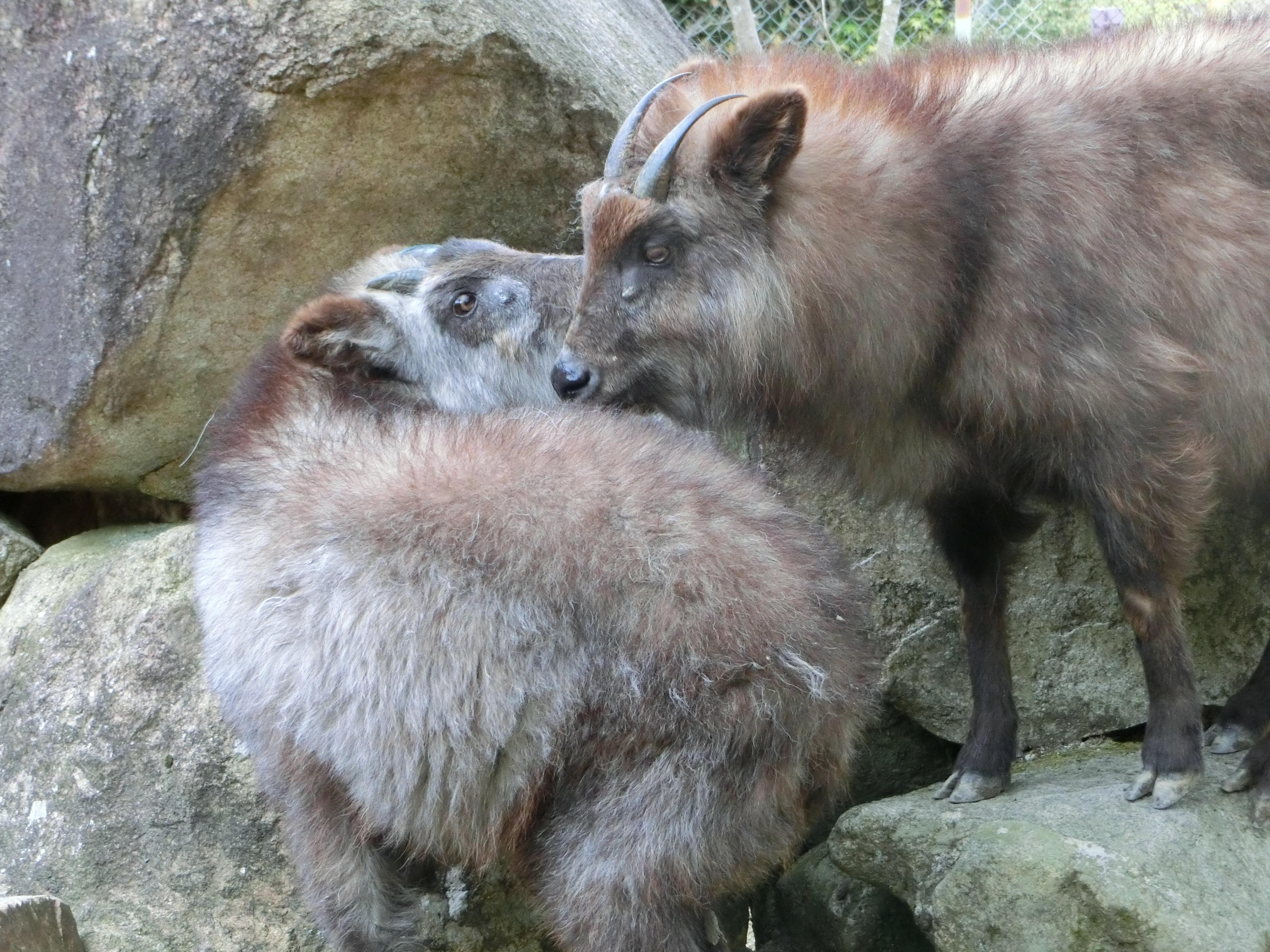 http://www.asazoo.jp/animal/blog/CIMG6261.JPG