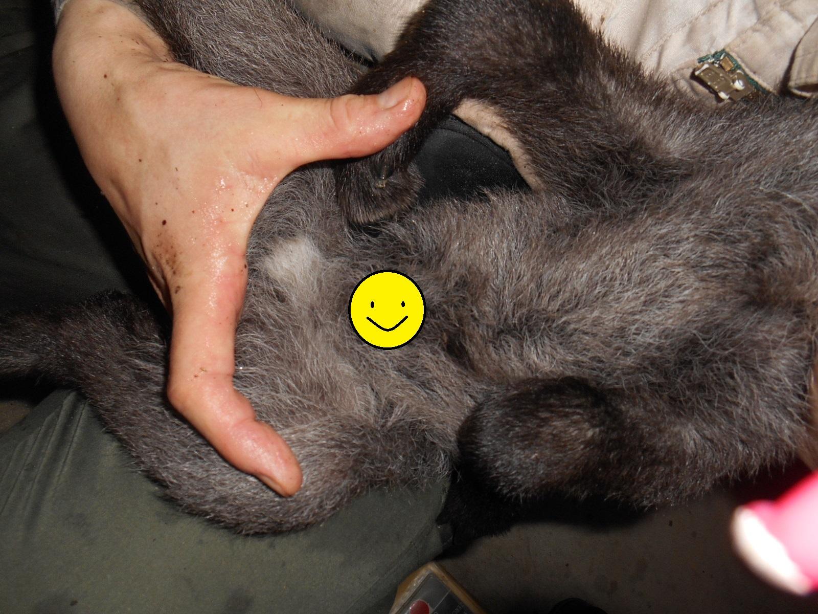 http://www.asazoo.jp/animal/blog/DSCN5690.JPG
