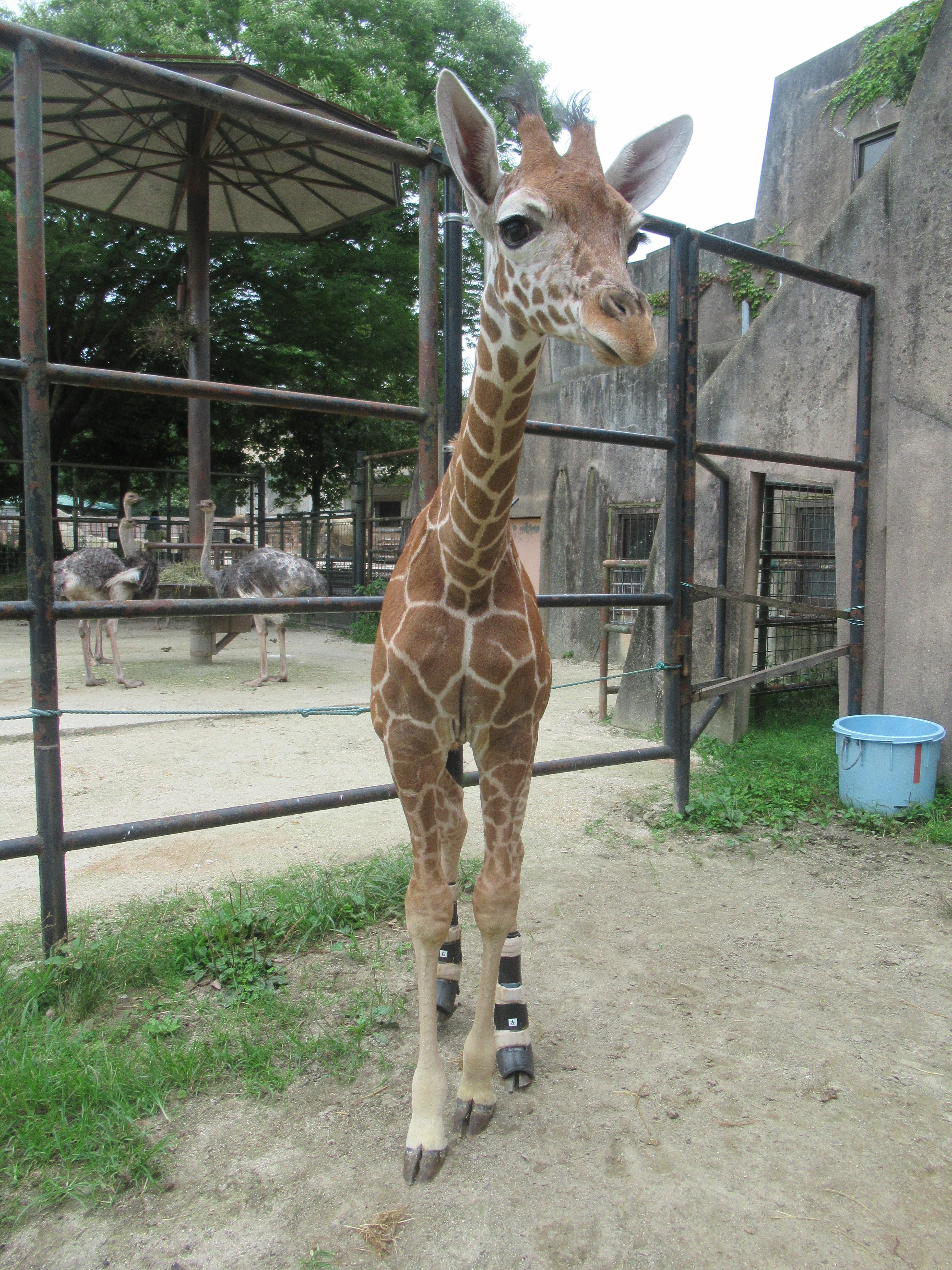 http://www.asazoo.jp/animal/blog/IMG_9430.JPG