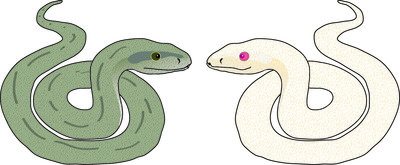 シロヘビ.jpg