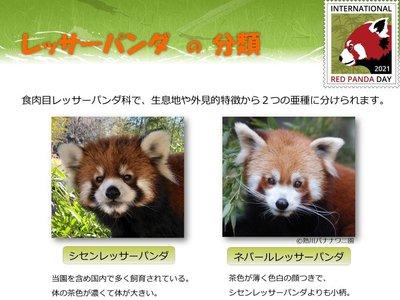 red panda day2021-4.jpg