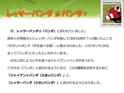 red panda day2021-2.jpg