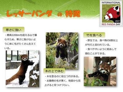 red panda day2021-5.jpg