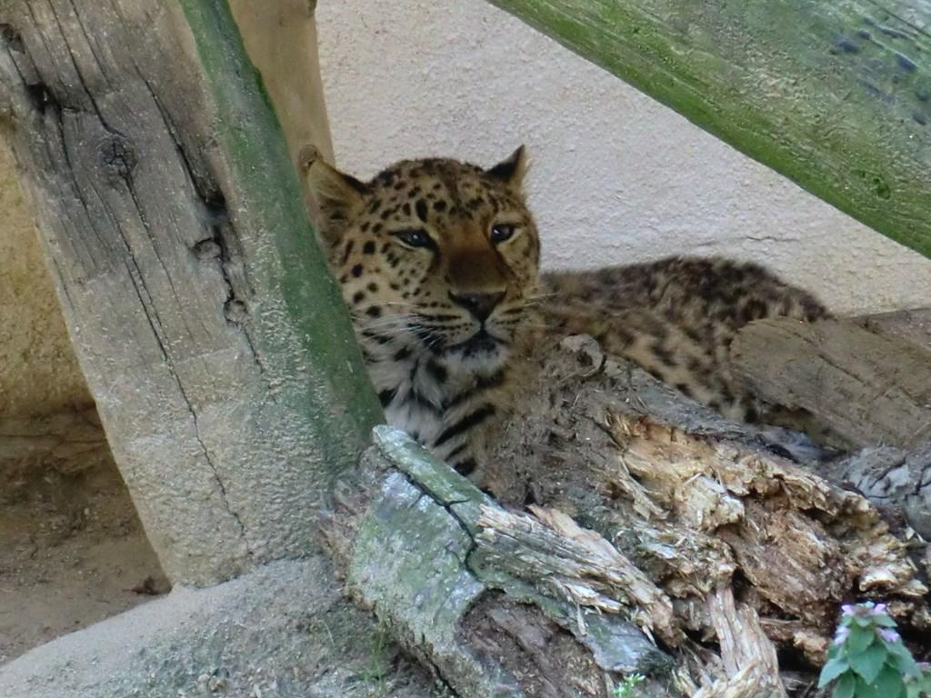 http://www.asazoo.jp/animal/blog/s-CIMG5593.jpg