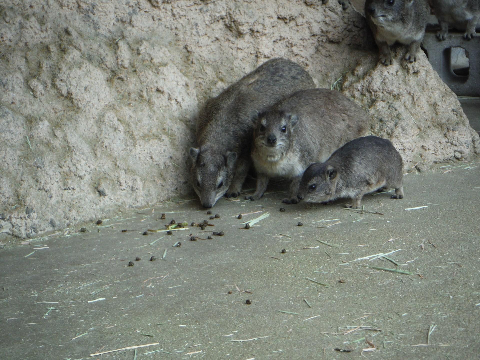 http://www.asazoo.jp/animal/blog/s-DSCF4616.jpg