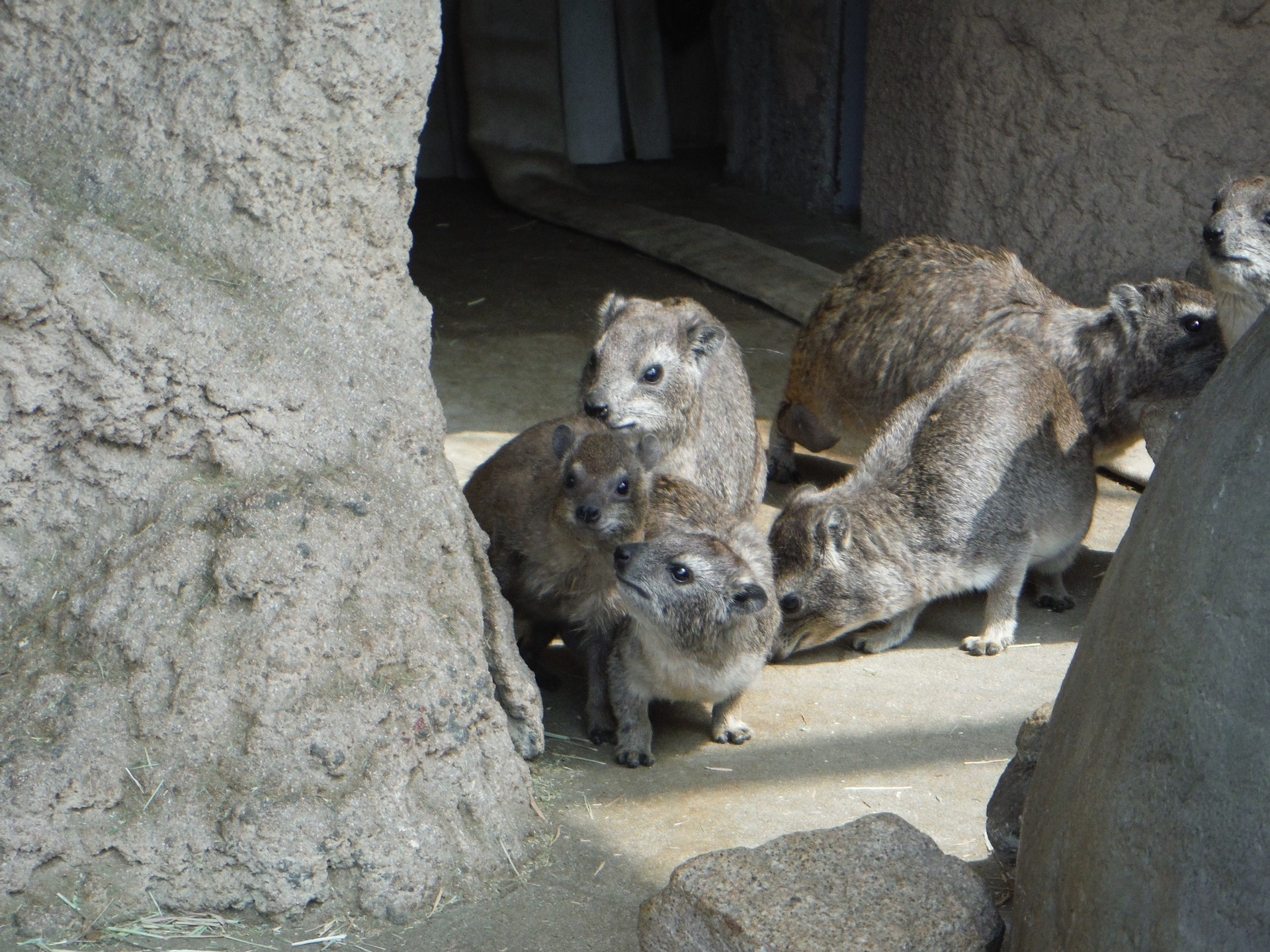 http://www.asazoo.jp/animal/blog/s-DSCF4632.jpg