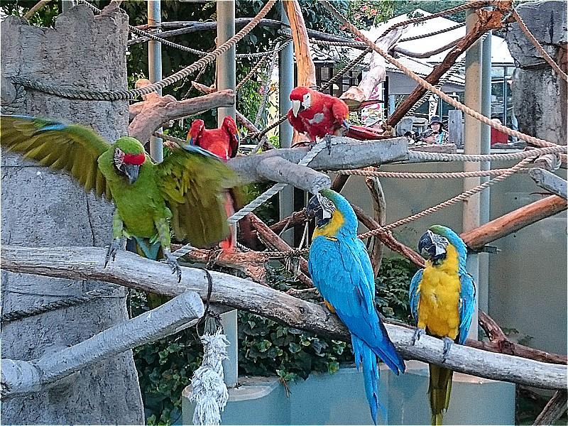 http://www.asazoo.jp/animal/blog/s-DSC_0490.jpg