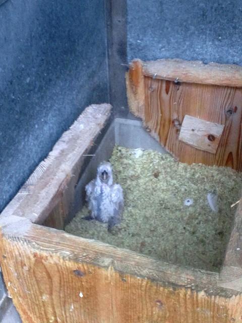 http://www.asazoo.jp/animal/blog/s-DSC_1676.jpg
