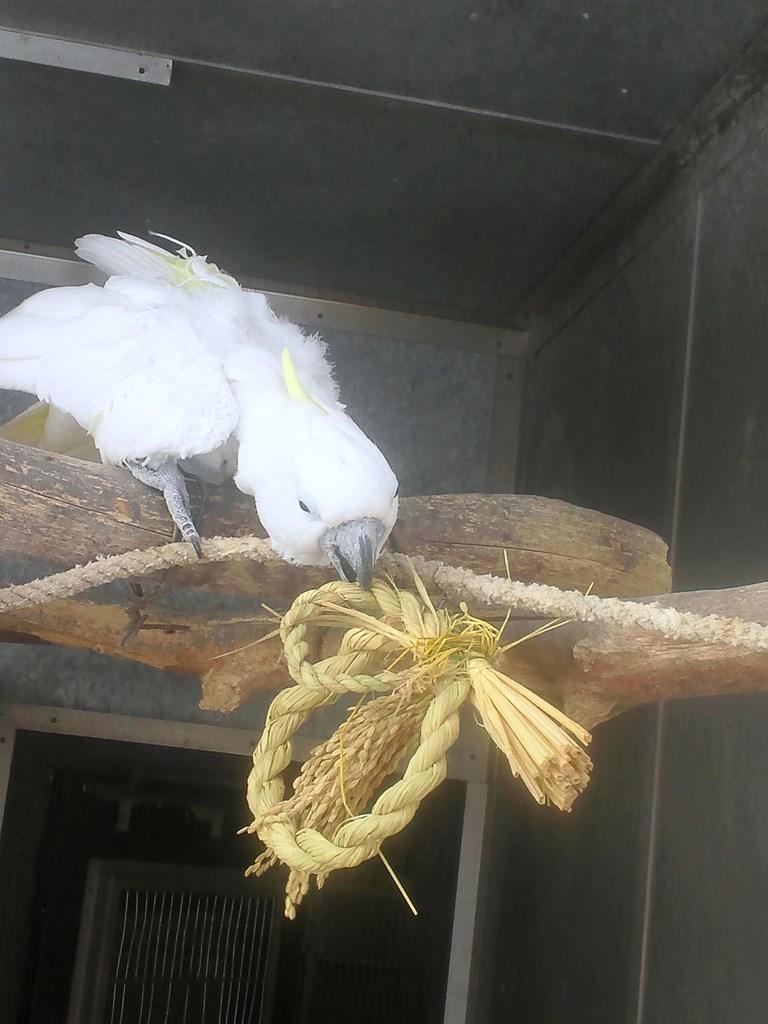 http://www.asazoo.jp/animal/blog/s-DSC_2372.jpg