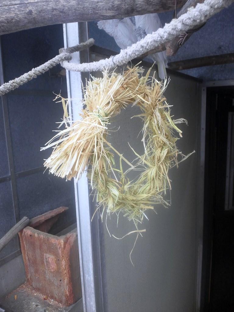http://www.asazoo.jp/animal/blog/s-DSC_2389.jpg