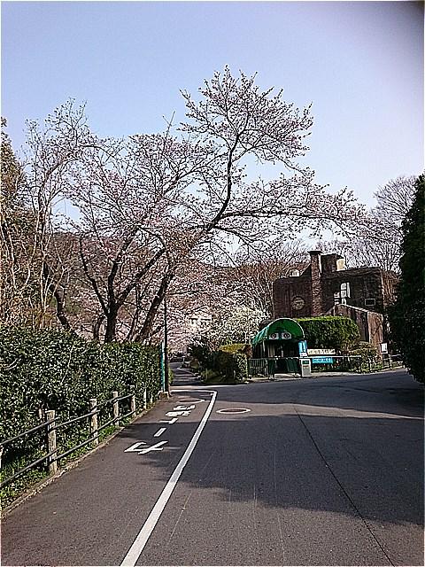 http://www.asazoo.jp/animal/blog/s-DSC_5163.jpg