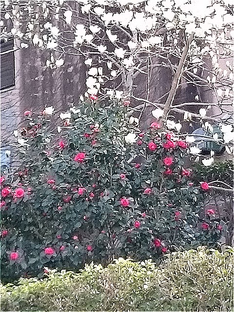 花見の季節です。