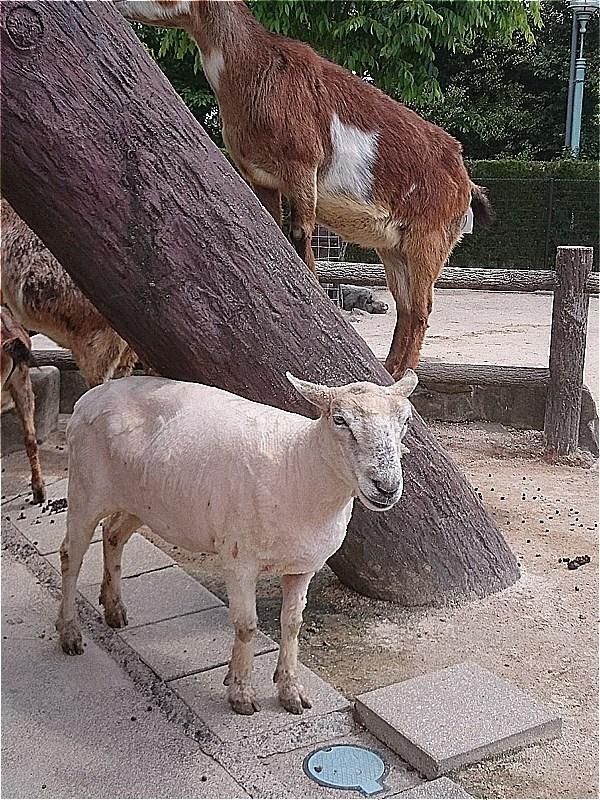 http://www.asazoo.jp/animal/blog/s-DSC_5892.jpg