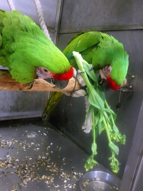 http://www.asazoo.jp/animal/blog/s-DSC_9984.jpg