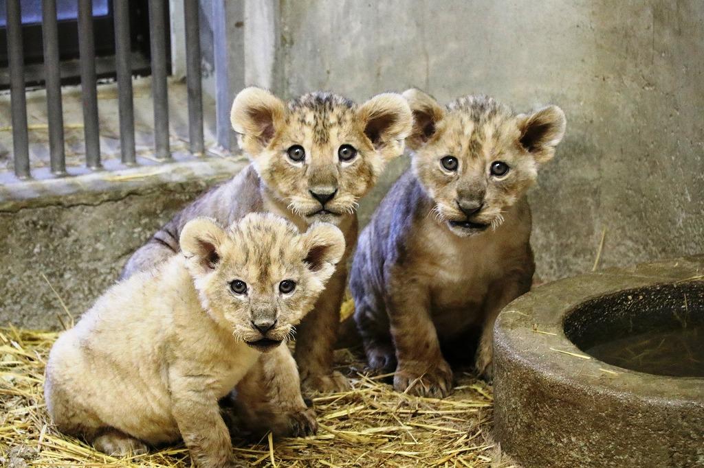 「安佐動物園」の画像検索結果