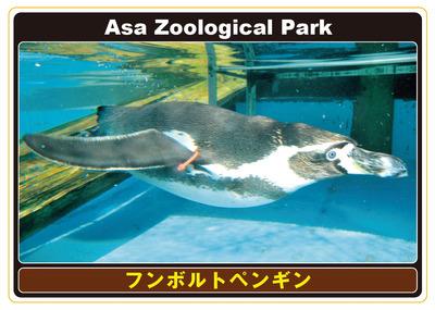 07_フンボルトペンギン表.jpg