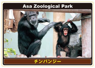 11_チンパンジー表.jpg