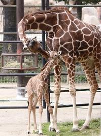 キリコと赤ちゃん.jpg